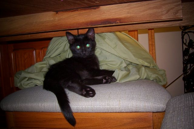 Spooky was just 4 weeks old, he liked to hide on that chair