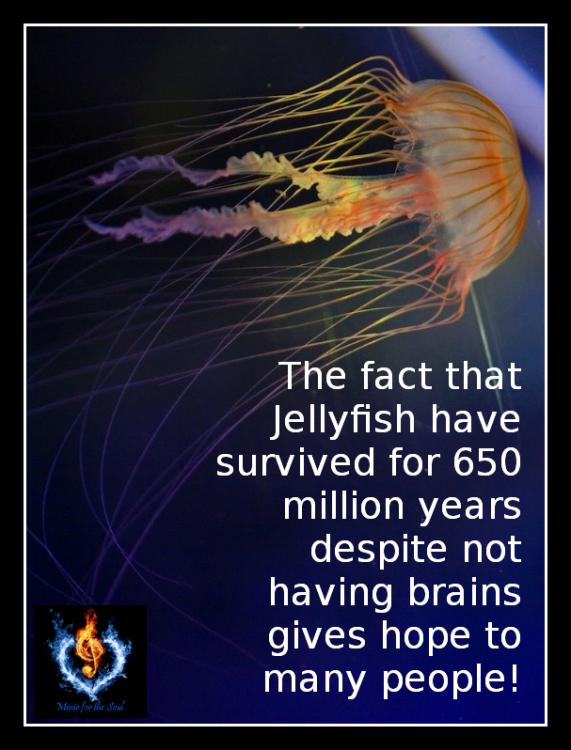 caf420e222_Jellyfish-Fact.thumb.png.3c53abc2529b7d753098e0581322b49b.png