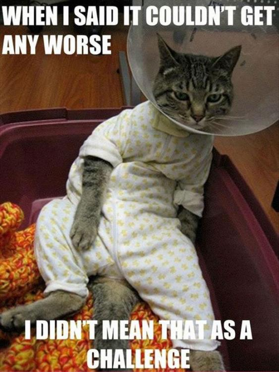 Funny-Cat-Pictures-with-Captions-45.jpg