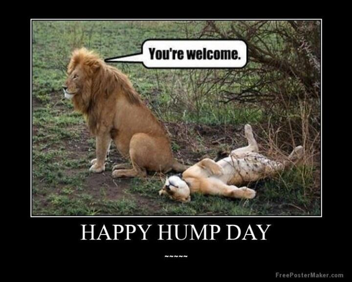HUMP DAY.jpg